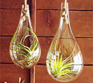 roost recycled glass terrariums